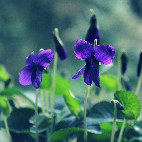 Valentinstag Ideen Fernbeziehung: Flowers, Plants Und Garden