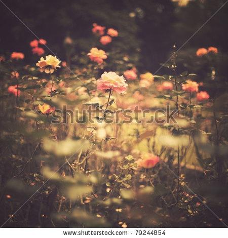 Sepia rose garden