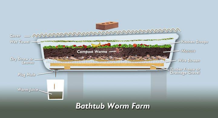 Worm farm in a Bathtub