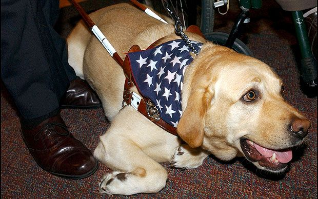 One of the unsung heroes of 9/11 was a guide dog, Roselle, a yellow Labrador who led her blind owner, Michael Hingson, down 78 storeys of the North Tower and to the home of a friend.