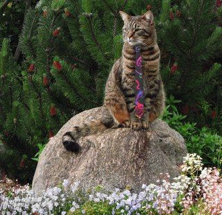 #cat wearing a #colorful #versace #necktie