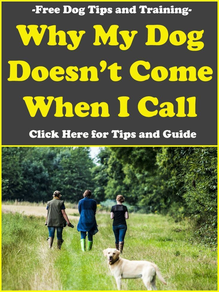 Dog Tips And Training Why My Dog Doesn T Come When I Call Here