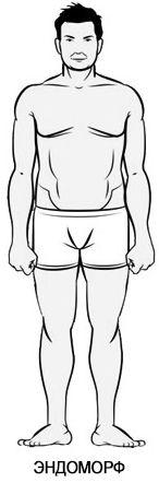 Тренировка для эндоморфа | Энциклопедия бодибилдинга. Фармакология, тренировки, питание.