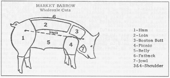 market steer diagram