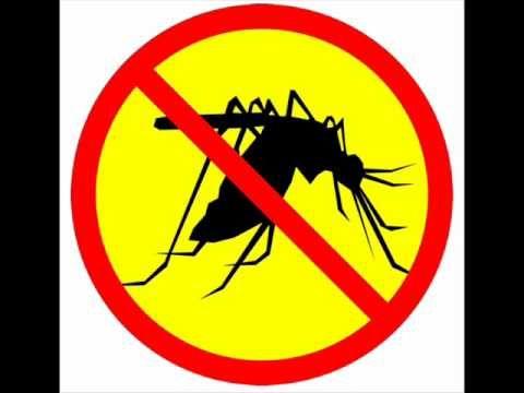 Anti mosquito Sound! really work
