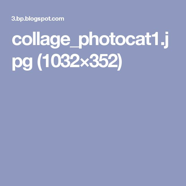 collage_photocat1.jpg (1032×352)