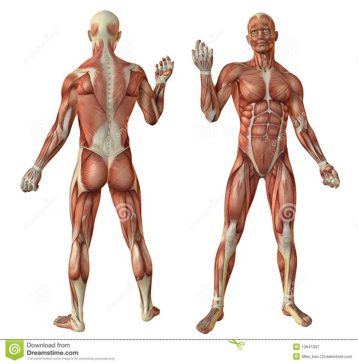 90 best Human anatomy & character design images on Pinterest ...