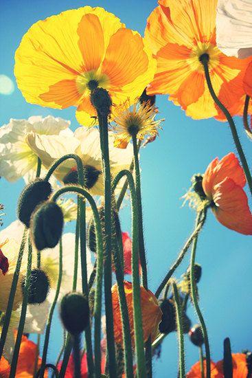 Flower Photography Yellow  Spring Summer Romantic by JosephineMok