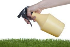 If you want to perk up your lawn in a cheaper, more natural way, consider making your own homemade lawn fertilizers. Take a look at this article for more tips and common homemade lawn fertilizer recipes.