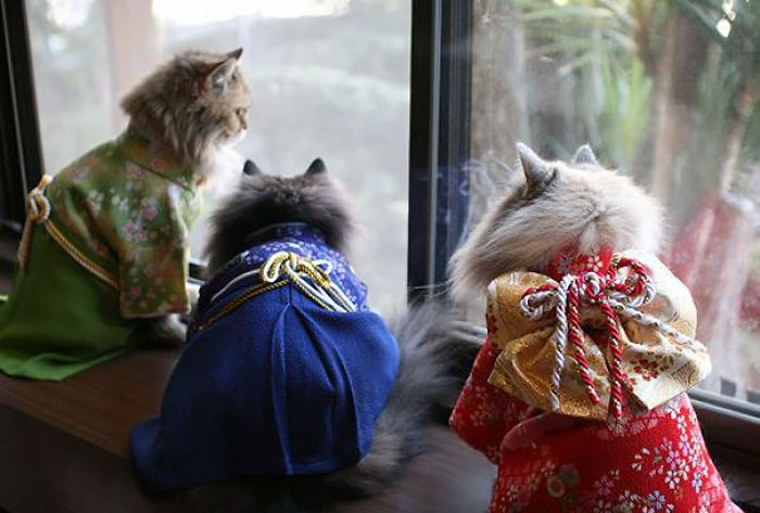 Kimono Cat - Cats In Kimonos Are A Thing In Japan Read more at http://museperk.com/cats-in-kimonos-are-a-thing-in-japan/#5uPihl9buS8ywyvh.99