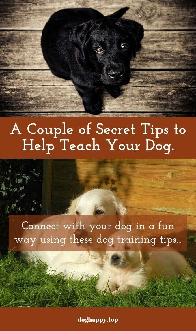 Train Any Dog With These Great Hints Dog Training Dogs Dog