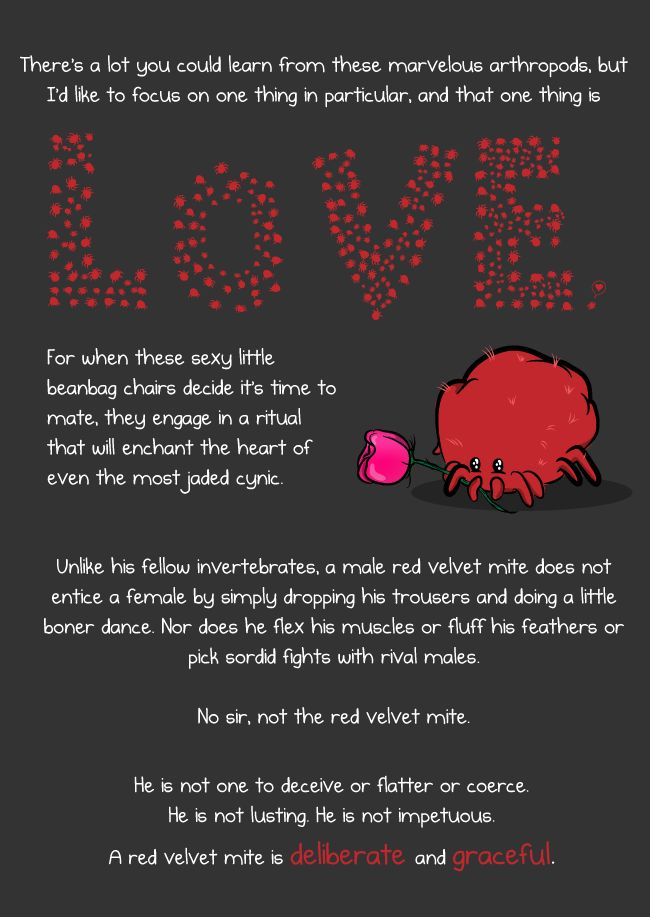 This is a red velvet mite and he is here to teach you about love - The Oatmeal -- oh, gahaaahhhhd
