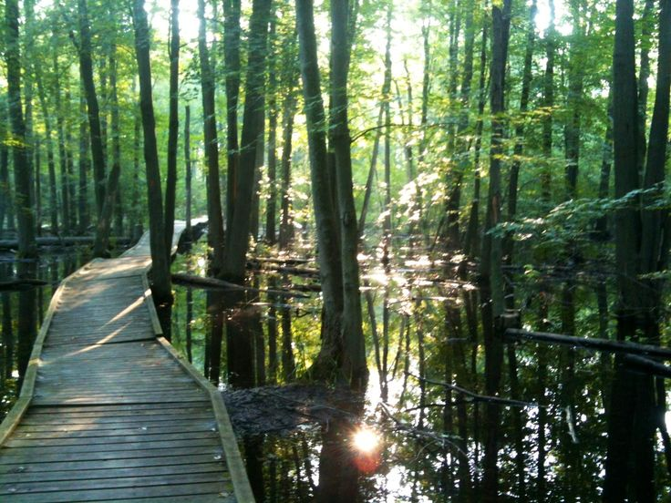 The arboretum boardwalk at sunrise, so peaceful and luckily the all-natural mosquito repellent saved us from the hungry army buzzing all around us (July 2013)