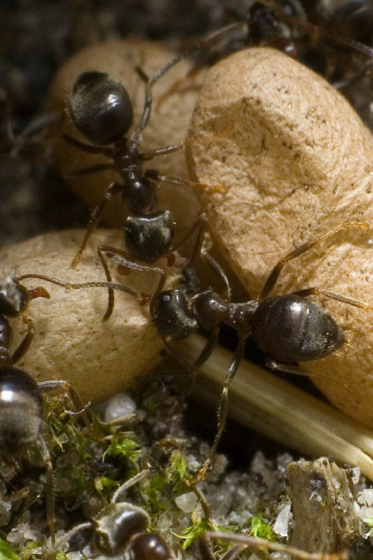 Ants 101: a guide to identifying common types of ant species