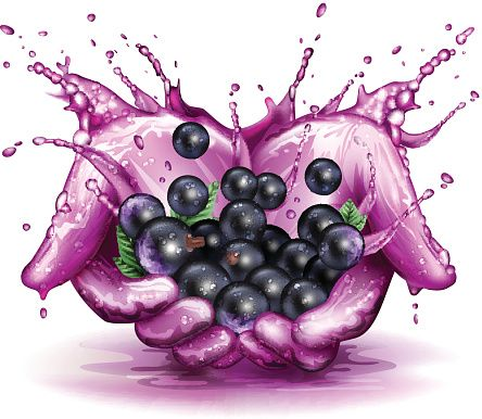 Image result for blackcurrant vector