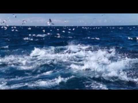 Ennio Morricone - Le vent, le cri.  Beautiful music, great graphics of the sea, dolphin, birds.