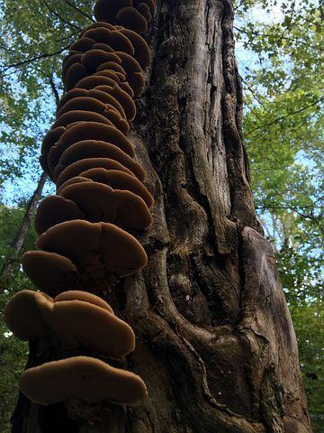 Tree, Fungi, Mushroom, Brown