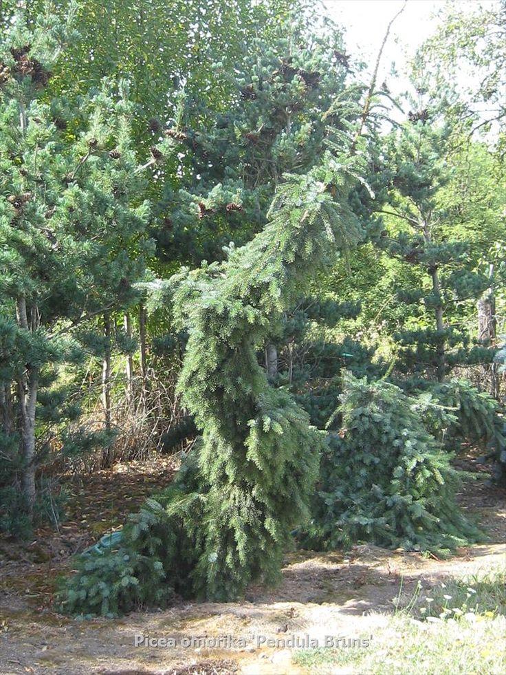 J Farms Llc Whole Nursery Supplies Plant Growers In Oregon Guide