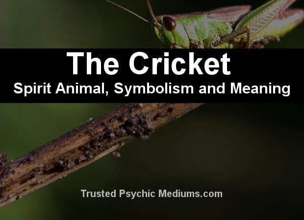 The Cricket Spirit Animal A Complete Guide To Meaning And Symbolism Spirit Animal Animal Spirit Guides Spirit Animal Meaning