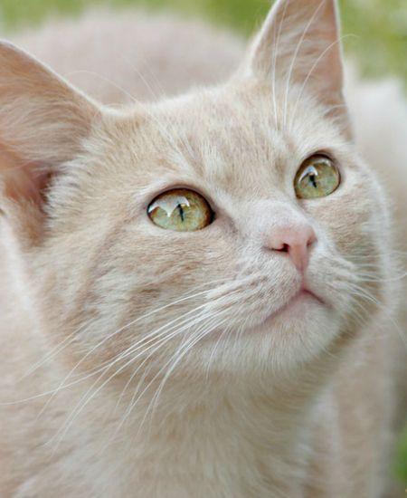 yskz:  ~ watching the birdies ~ (=^.^=) http://ift.tt/1jilu2Z