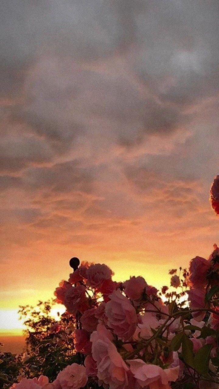 Pink Flowers In The Sunset Summer Photography Wallpaper Aesthetic Wallpapers Sky Aesthetic