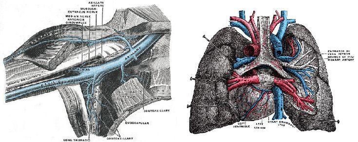 Медицинская анатомическая иллюстрация — история изучения тела человека в атласах 5 столетий. Часть 3 / Блог компании Visual Science / Хабрахабр