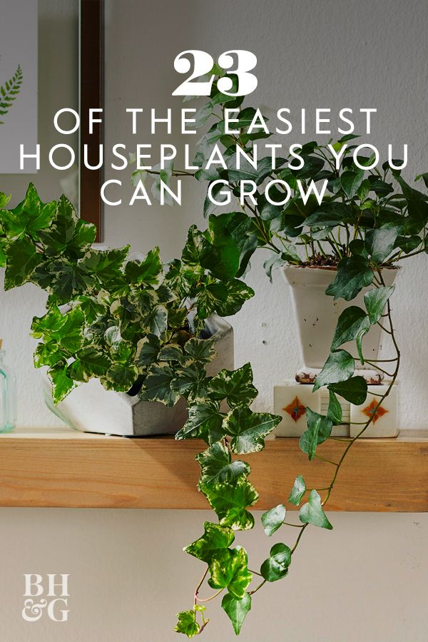 23 Of The Easiest Houseplants You Can Grow In 2020 Indoor Plants Low Light Ivy Plant Indoor Houseplants Low Light