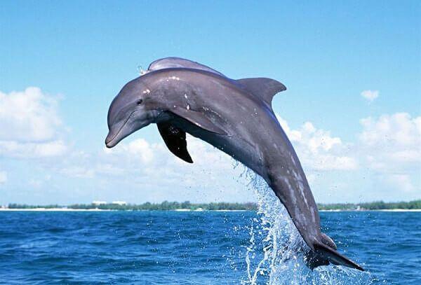 Que Comen los Delfines? - Donde Viven, Como Nacen