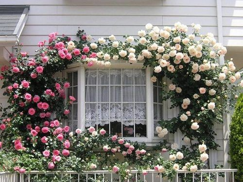 Bay Window Garden Ideas how to replace an existing window with a garden window garden windows diy network and window Find This Pin And More On Window Gardens