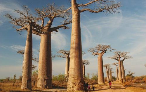 Madagascar Adventure: $3990: 21 days