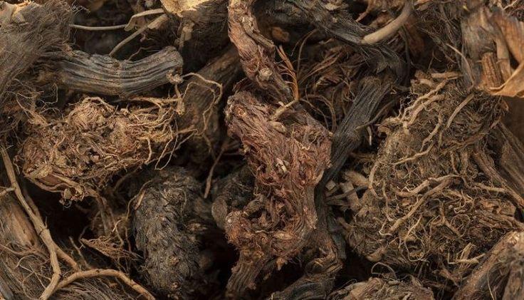 Spikenard Roots – Nardostachys Jatamansi (pitta depression)