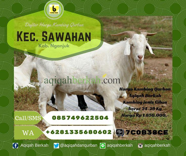 Call / SMS : 0857 4962 2504 Whatsapp : +6281 335 680 602 PinBB : 7C0B38CE Daftar Harga Kambing Qurban Kec. Sawahan Kab. Nganjuk www.aqiqahberkah.com