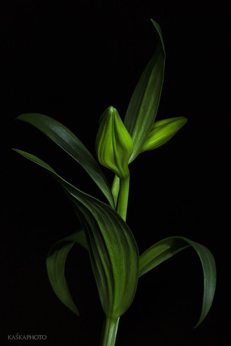 Kaska Photo » Studio flowers #studio #lilies #vision #macro #flowers #photography #style #gallery #interiordesign #artlovers #art #designer #homedecor #homedesigner #artcollector #artwork #decoration #decor #lifestyle #sikora #kaśka #kaśkasikora #posters #wnętrza #wystrójwnętrz #KatarzynaSikora #kaśkaphoto #wystawafotografii #photographyexhibition