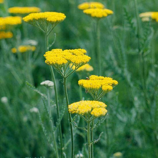 The 25 Best Rabbit Resistant Plants Ideas On Pinterest