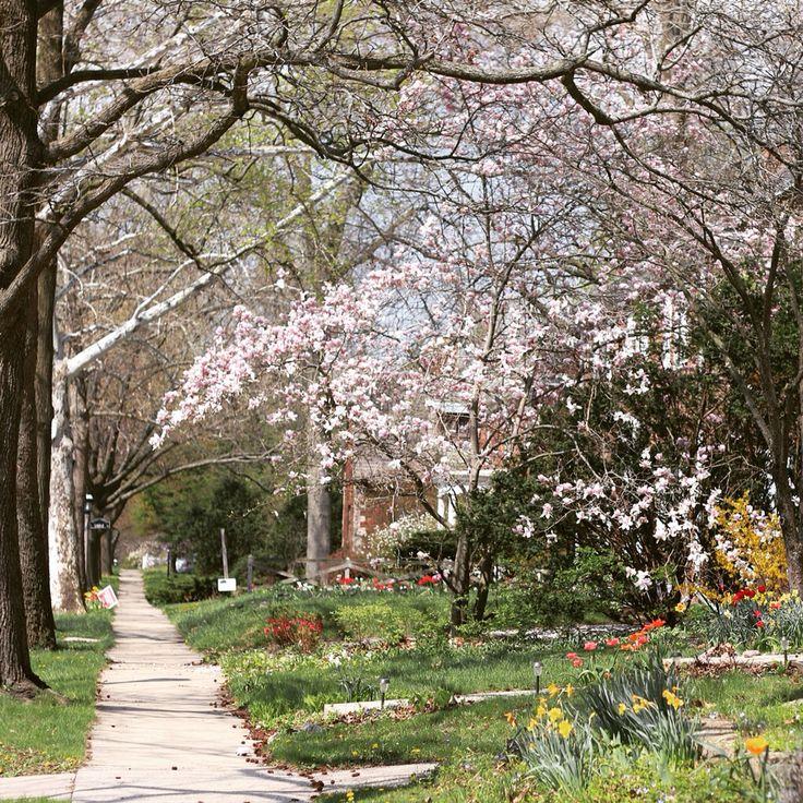 Spring! Champaign, Illinois, USA.