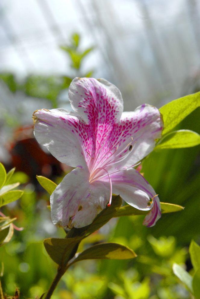 """translúcida ;) """"Un día en el Jardín Botánico"""" #estilodevida #trabajointeligente #internetmarketing www.robledoarte.com"""