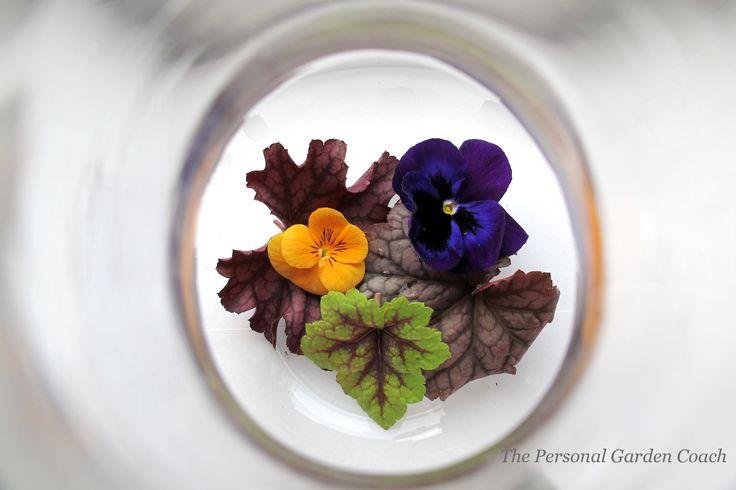 .: Personalized Gardens, Glasses, Gardens Coach, Motivation Gardens, Snippets, Winter Gardens