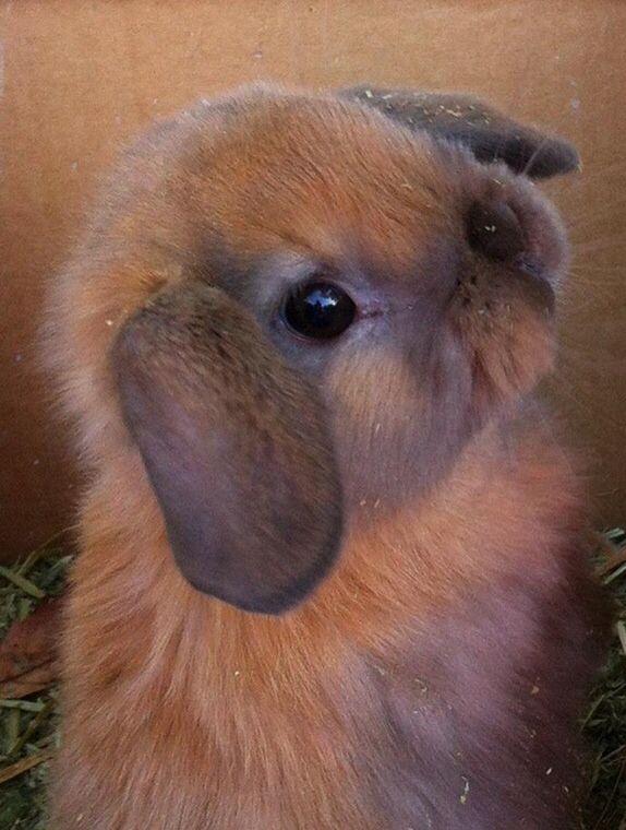 Dit konijntje had ik eerst en nog een witte