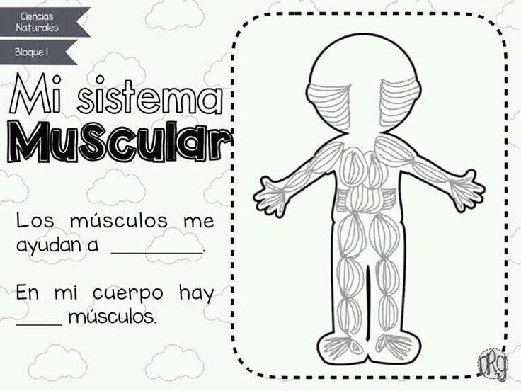 Sistema Muscular Trabajos Escolares Sistemas Del Cuerpo Humano Cuerpo Humano Para Ninos Sistemas Del Cuerpo