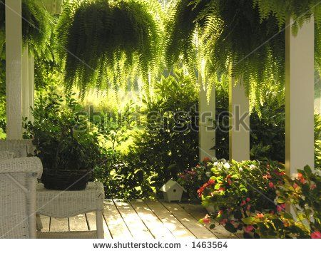 front porch with hanging ferns - stock photo