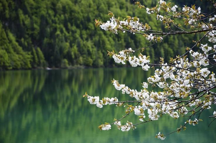 Fioritura Lago del Predil