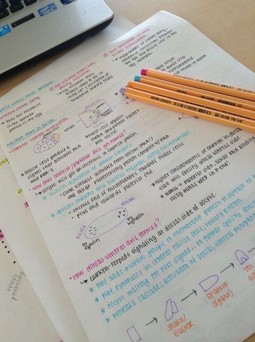 Imagen de school, notes, and pens