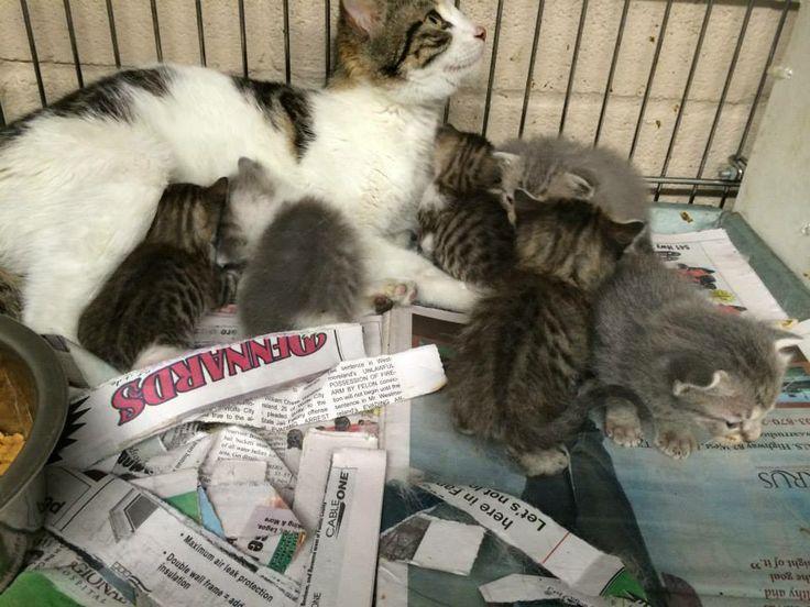 Safe! ^^  UBER URGENT  ^^   2014-281 City of Bonham (TX) Animal Shelter female, 1 year old mama to 6 beautiful babies, owner surrendered