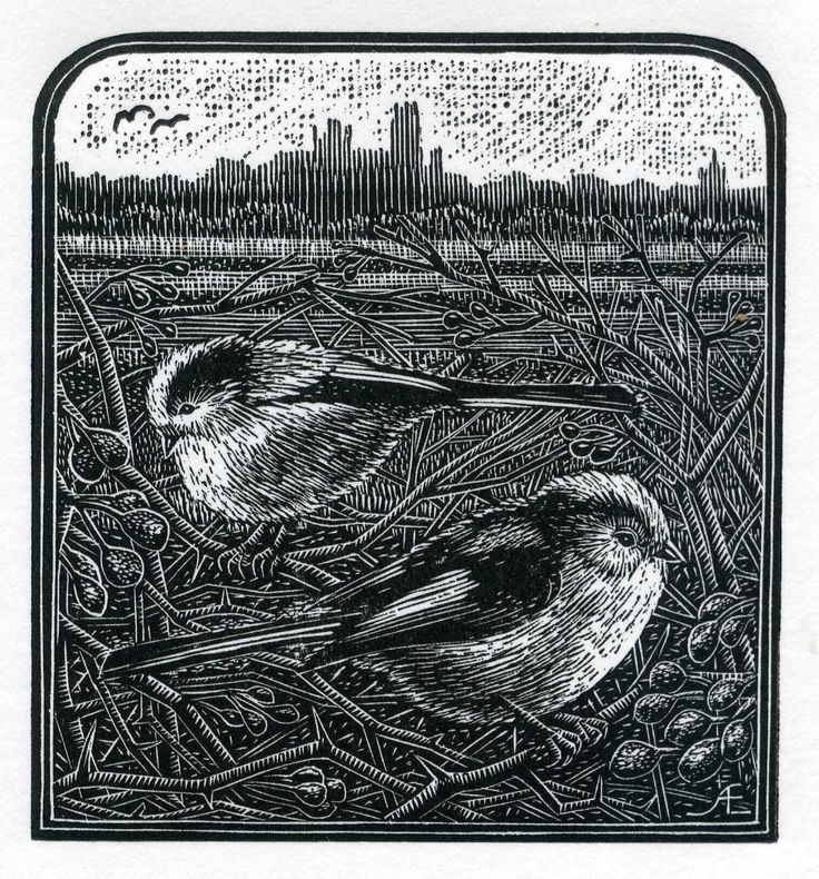 Wood Engraver Andy English Long Tail tits my favourite :)