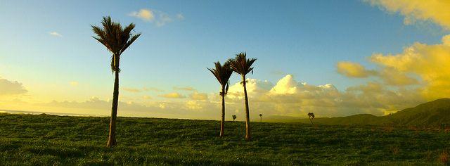 Nikau Palm Punakaiki Evening, New Zealand | Flickr - Photo Sharing!