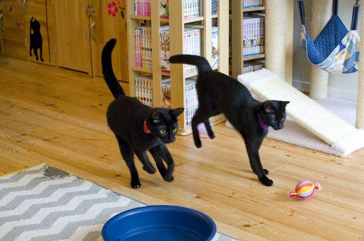 Nekobiyaka: Himeji, the world's first and only black-cat cafe