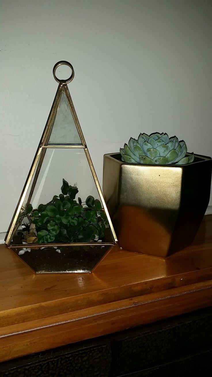 best succulents images on pinterest container garden
