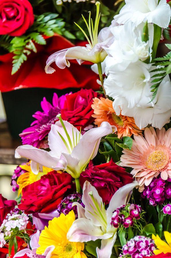 Beautiful flowers by Sotiris Filippou on 500px