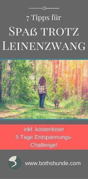 Leine Spaziergang   Spaß Gassi   Spaß mit Leine   Hund Übungen   Training Hund   positives Hundetraining   Ideen für Hundespaziergang