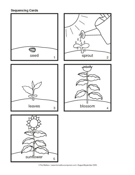 sequencing worksheets for preschool sunflower sequencing booklet the mailbox makes a great 93613